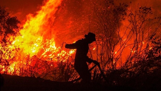 Forest fires in Indonesia raise global warming concerns hinh anh 1
