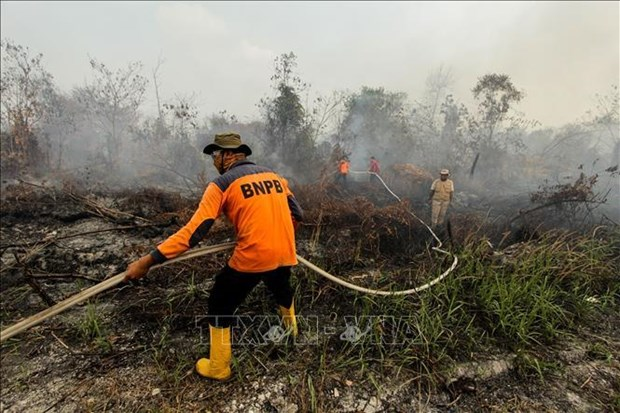 Indonesia: Over 39,000 people affected by haze smoke hinh anh 1