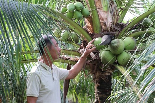 Ben Tre develops value chains for key agricultural products hinh anh 1