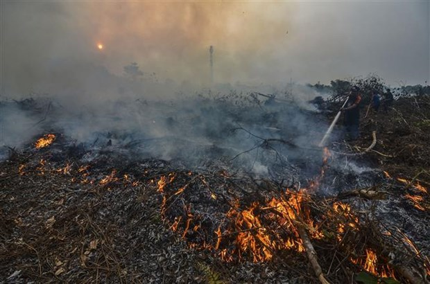 Indonesia: Forest fires break out on Malaysian-controlled land hinh anh 1