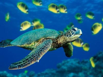 Programme to promote conservation of endangered sea turtles hinh anh 1