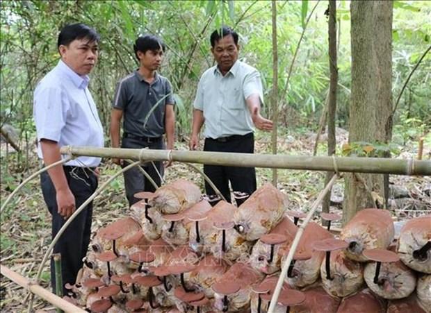Genome of rare Linhzhi mushroom conserved hinh anh 1