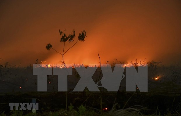 Haze from forest fires in Indonesia speads to neighbouring countries hinh anh 1