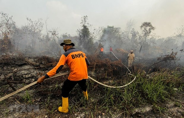 Indonesia closes plantation companies, schools due to wildfires hinh anh 1