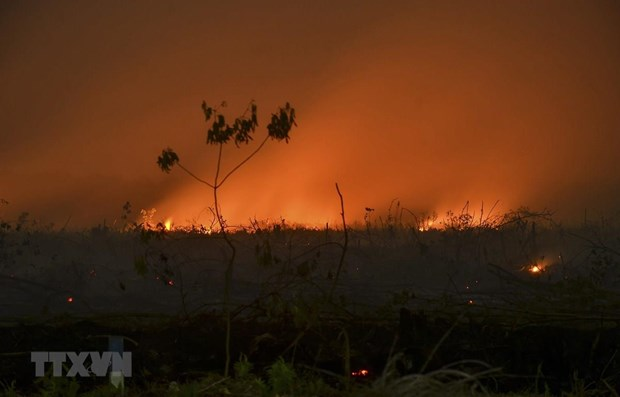 Indonesia: schools closed due to smoke from forest fires hinh anh 1