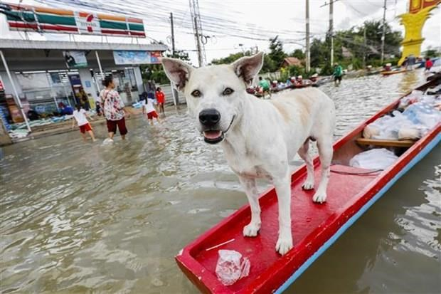 About 20,000 people evacuated in Thailand due to flooding hinh anh 1