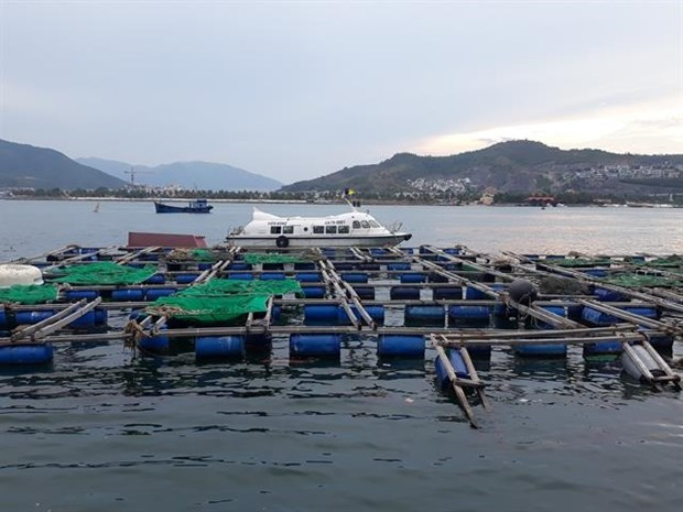 Nha Trang sets up zone for cage aquaculture hinh anh 1