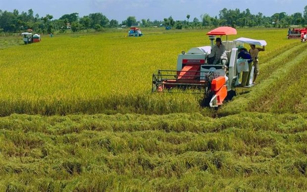 Local rice industry needs technology in preservation, processing hinh anh 1