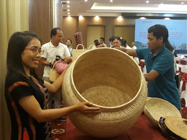 US-funded project helps develop rattan, herbal plants in Quang Nam hinh anh 1