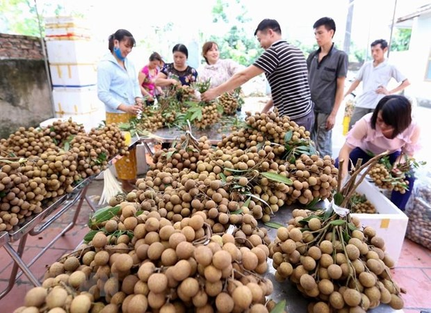 Vietnam focuses on fruit exports for higher value hinh anh 1