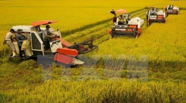 Can Tho leads Mekong Delta region in rural development hinh anh 1
