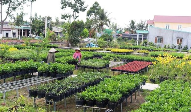 Mekong Delta agriculture adapts to climate change hinh anh 1