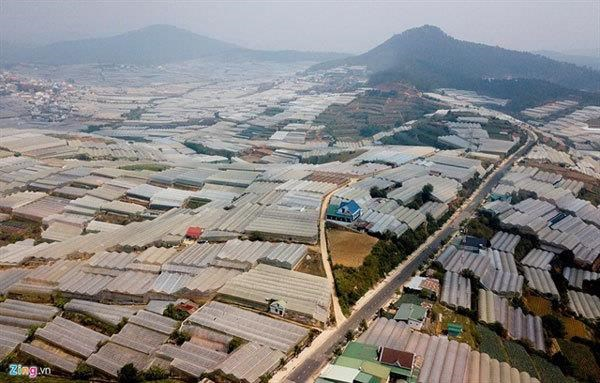 Greenhouse expansion damages Da Lat's environment hinh anh 1