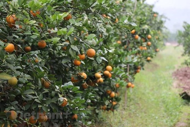 Seminar discusses organic fruit cultivation hinh anh 1