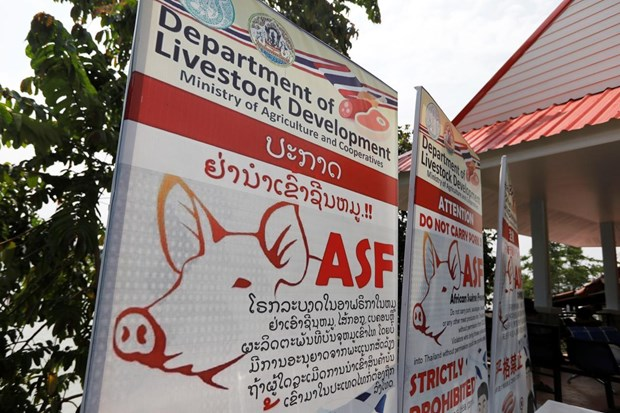 Thailand puts 24 provinces on alert against African swine fever hinh anh 1
