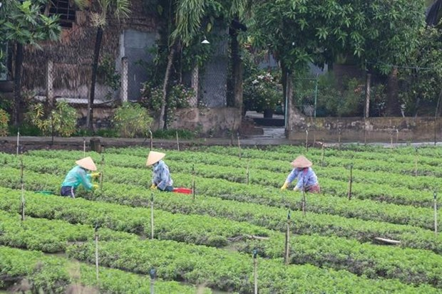 Tien Giang develops specialised vegetable-growing areas hinh anh 1