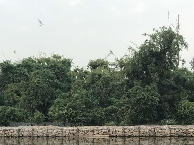 Hai Duong works to preserve Stork Island hinh anh 1