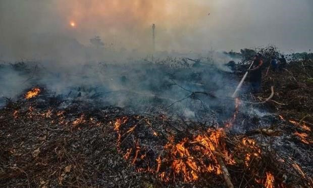 Indonesians' life expectancy likely to fall due to haze from wildfires hinh anh 1