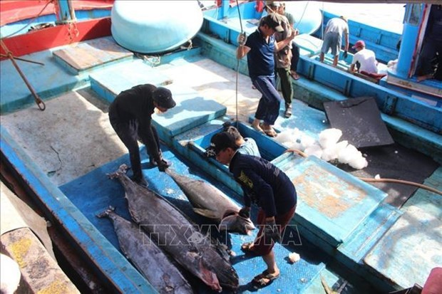 Value chains help Vietnamese tuna become more competitive hinh anh 1