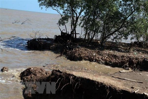 Kien Giang needs over 68.8 million USD to tackle coastal erosion hinh anh 1