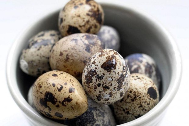 Singapore suspends quail egg imports from Malaysia hinh anh 1