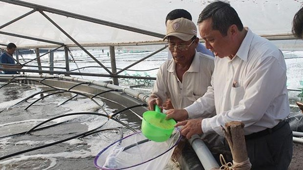 Shrimp breeders expand production, seek to join global supply chains hinh anh 1