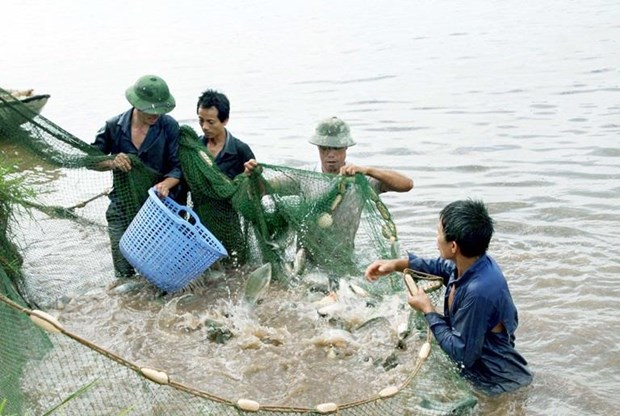 Vinh Phuc: aquaculture output up nearly 5 percent hinh anh 1