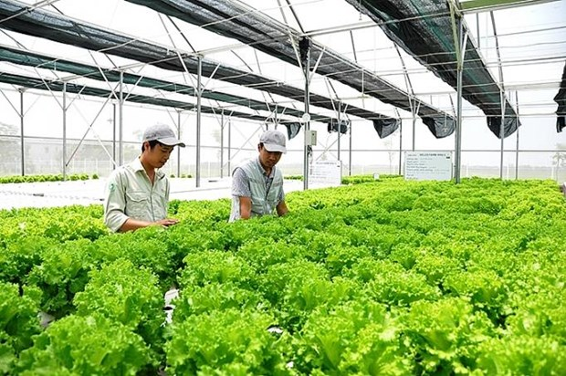 Japanese firms increase investment in Vietnam's agriculture hinh anh 1