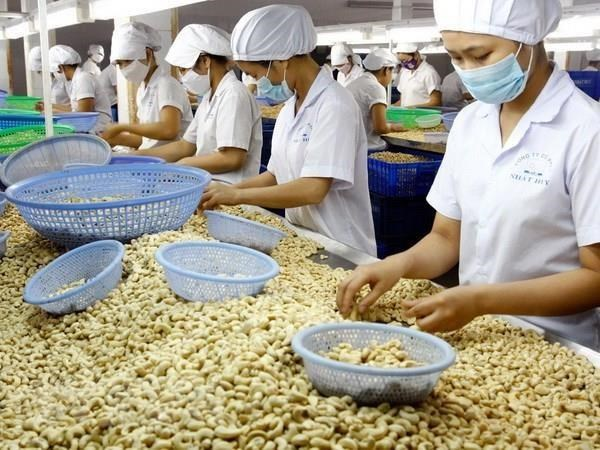 Vietnam's cashew nut exports to China surge in nine months hinh anh 1