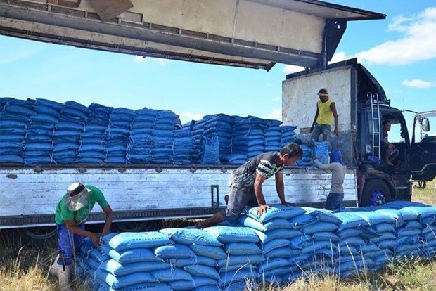 Philippines to slow down rice imports next year hinh anh 1