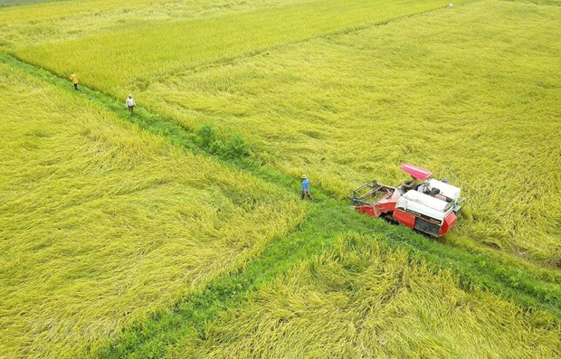 Northern localities aim for 7 million tonnes of paddy in winter crop hinh anh 1