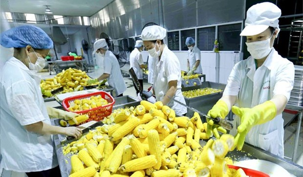 Vietnam seeks to boost fruit-vegie-flower exports to Asia, Europe hinh anh 1