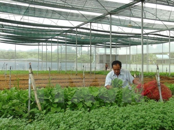 Dak Lak needs clear direction for organic agriculture: official hinh anh 1