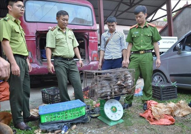 Dien Bien police seize large amount of trafficked wildlife animals hinh anh 1