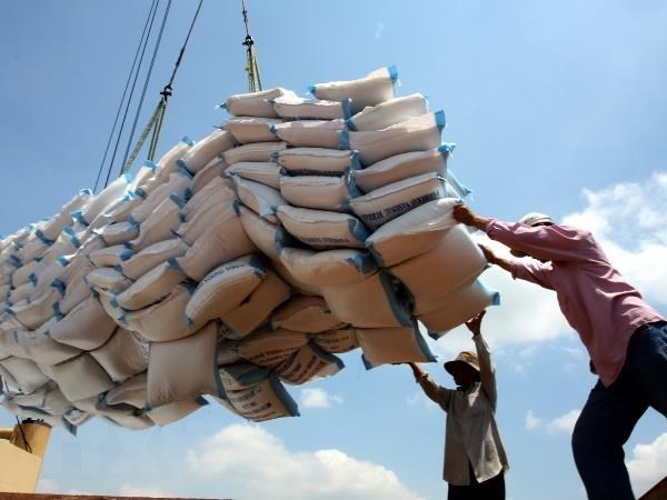 Rice export revenue suffers from price drop hinh anh 1