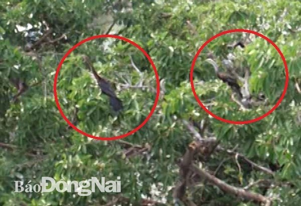 About 500 snakebirds discovered in Dong Nai province hinh anh 1