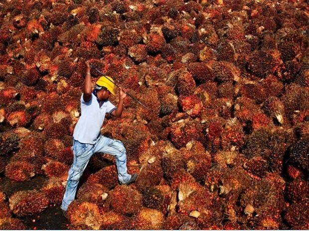 India resumes palm oil imports from Malaysia hinh anh 1