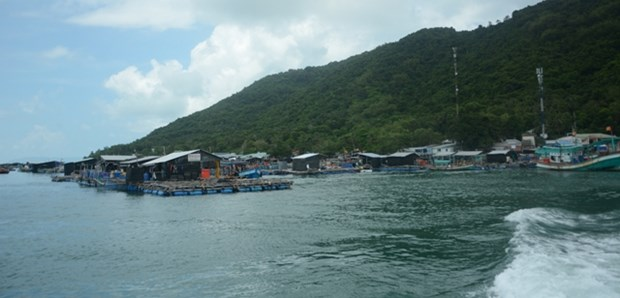 Island commune to expand floating-cage breeding of marine fish hinh anh 1