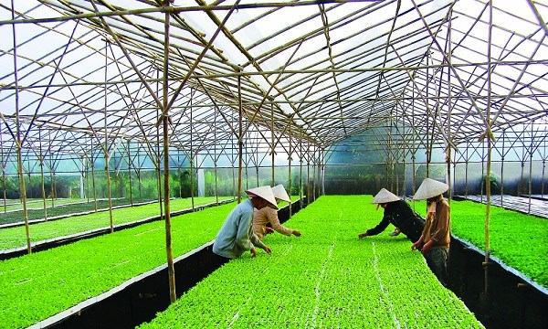 Festival featuring Hanoi's agricultural products, craft villages to open hinh anh 1