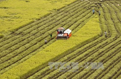 Agricultural sector gains trade surplus of 8.8 bln USD in 11 months hinh anh 1