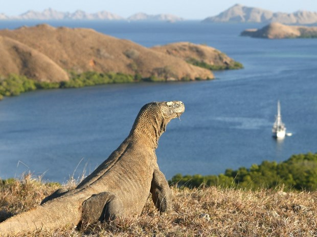 Indonesia targets 50,000 foreign tourists to Komodo island a year hinh anh 1