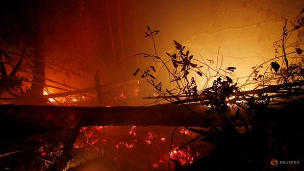 Indonesia: Forest fires burn 1.6 million hectares of land hinh anh 1