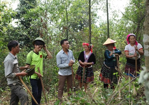 Forest management conference looks at ways to improve resources protection hinh anh 1
