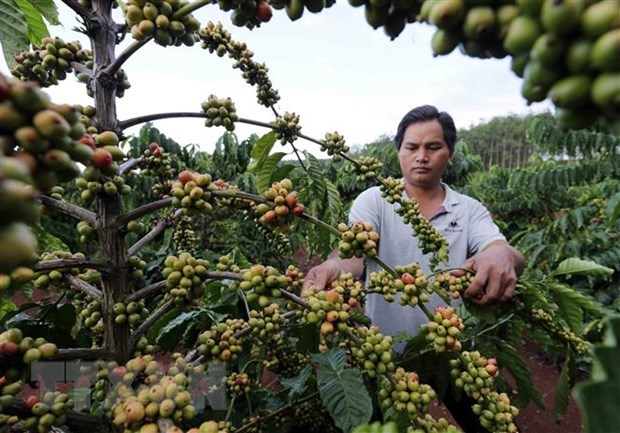 Experts talk ways to add value to Vietnamese coffee hinh anh 1
