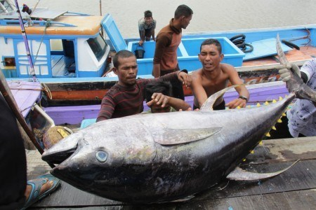 Indonesia plans to set up int'l fish markets hinh anh 1
