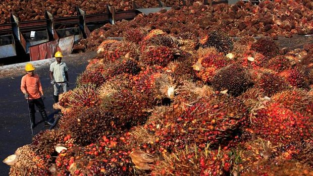 Malaysia's palm oil prices unlikely to drop next year hinh anh 1
