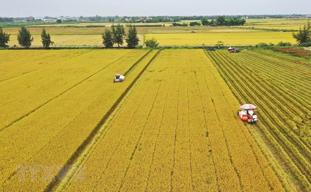 Vietnam ranks fourth in Southeast Asia in food security hinh anh 1