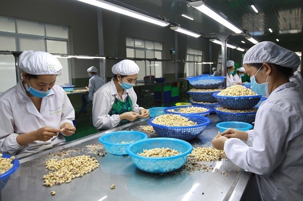 Cashew nut exports to China rise sharply hinh anh 1