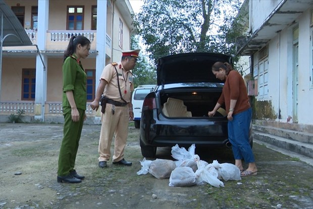 Quang Tri police save nine trafficked pangolins hinh anh 1