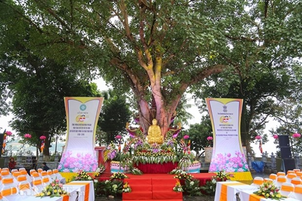 Ceremony marks 60th anniversary of Indian Bodhi tree gifted to Vietnam hinh anh 1
